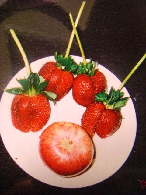 5月11日 イチゴが大きい!