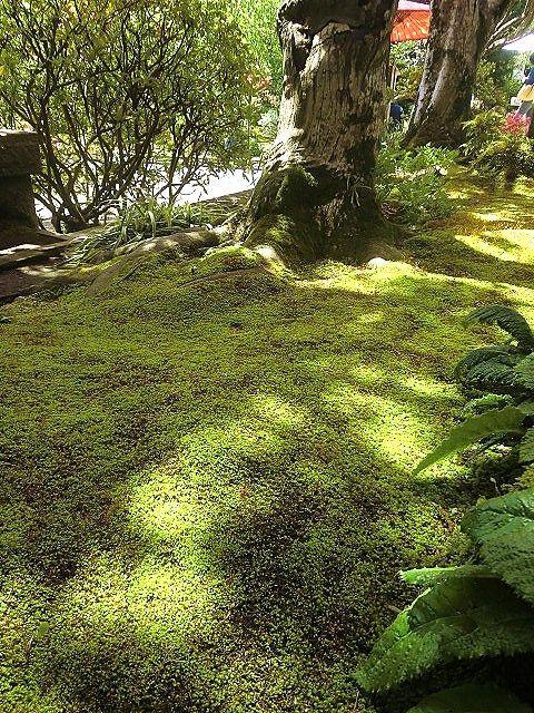 苔のじゅうたん