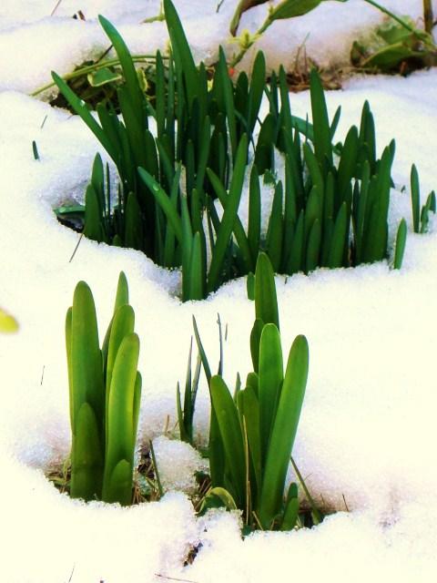 立春 今日から春