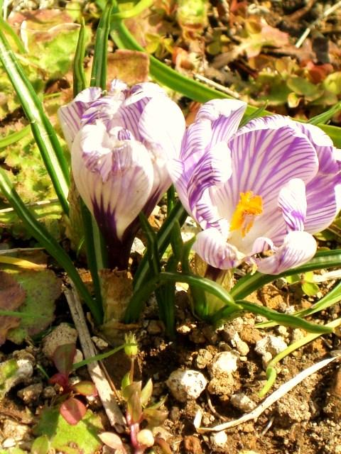 3月1日 Spring has come!